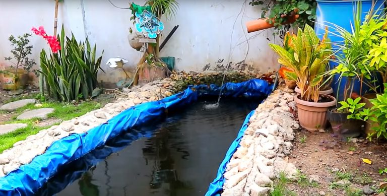5 Actions To a Perfect Koi Fish Pond
