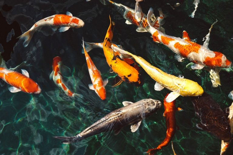 "The ""Must-Not"" to Succeed in Fish Breeding"