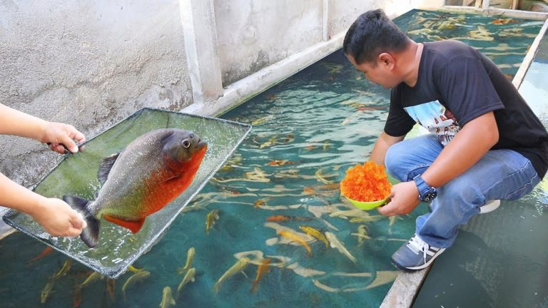 Most Asked Questions in Fish Breeding