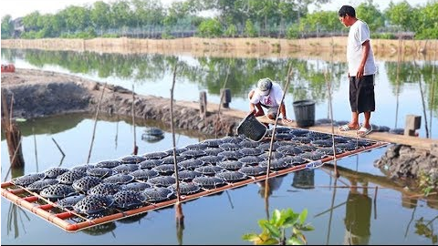 Mud Crabs and Milk Fish Farming