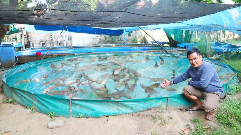 Fish Farm Producing Thousands of Fish