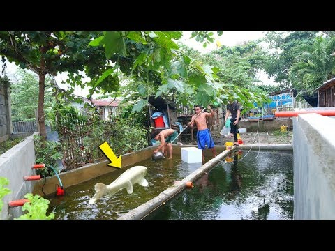 Significant Tips in Harvesting, Bagging and Transferring Fish