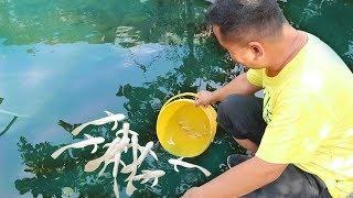 Motivation Behind Fish Keeping