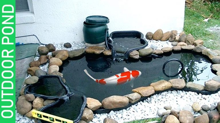 Aeration and Filtration in your Fish Tank