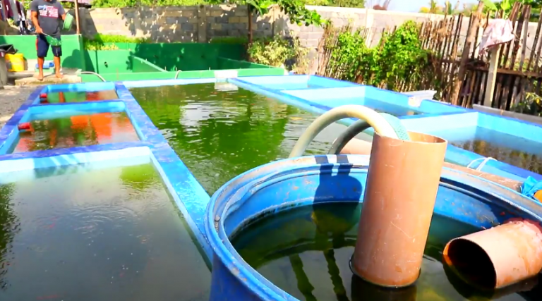 Caring for your Fishes: Proper Pond Oxygenation