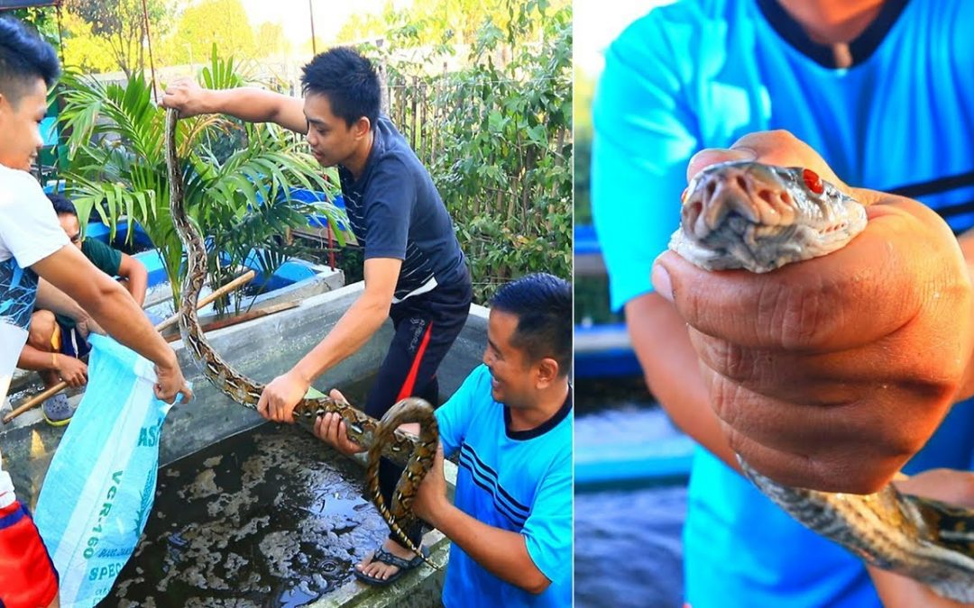 See what we have Found while Checking the Backyard Fish Farm